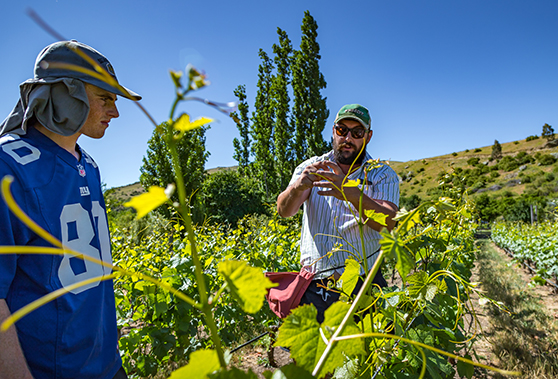 Team members of Viticultura working at Georgetown Vineyard.