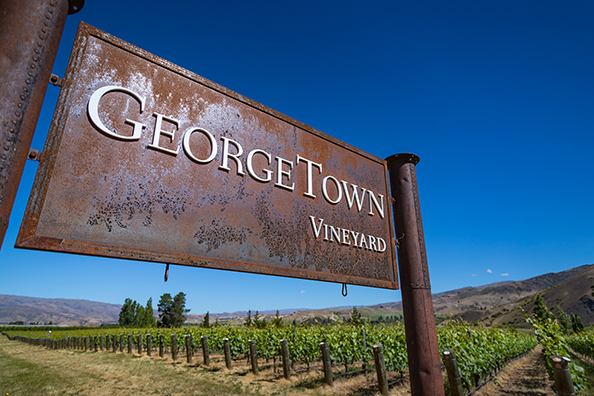 Georgetown Vineyard-30.1.jpg