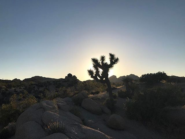 It's the Joshua tree's struggle that gives it its beauty. Jeannette Walls #feedthatengine  #keepitwild #simplyadventure #wildernessculture #lifeofadventure #liveoutdoors #beautifuldestinations #roamtheplanet #discoverearth #wherewillwegonext #makemoments #exploremore #hike52challenge  #stayandwander #goexplore #destinationearth #familytravel #exploringtheworld #welltravelled #lovelifeoutside #mexico #ecuador #mtbaldy #usa #mountaineering #joshuatree #joshuatree #jumborocks