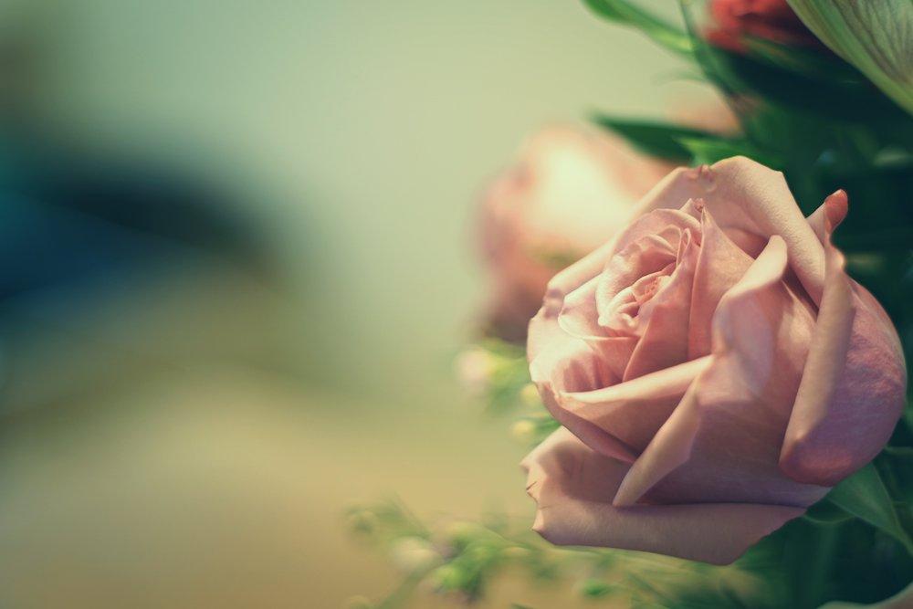 hacer agua de rosas