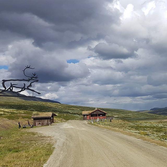 Gjør som Rudolf.  Ta sommerferien i Grimsdalen #villreinensrike