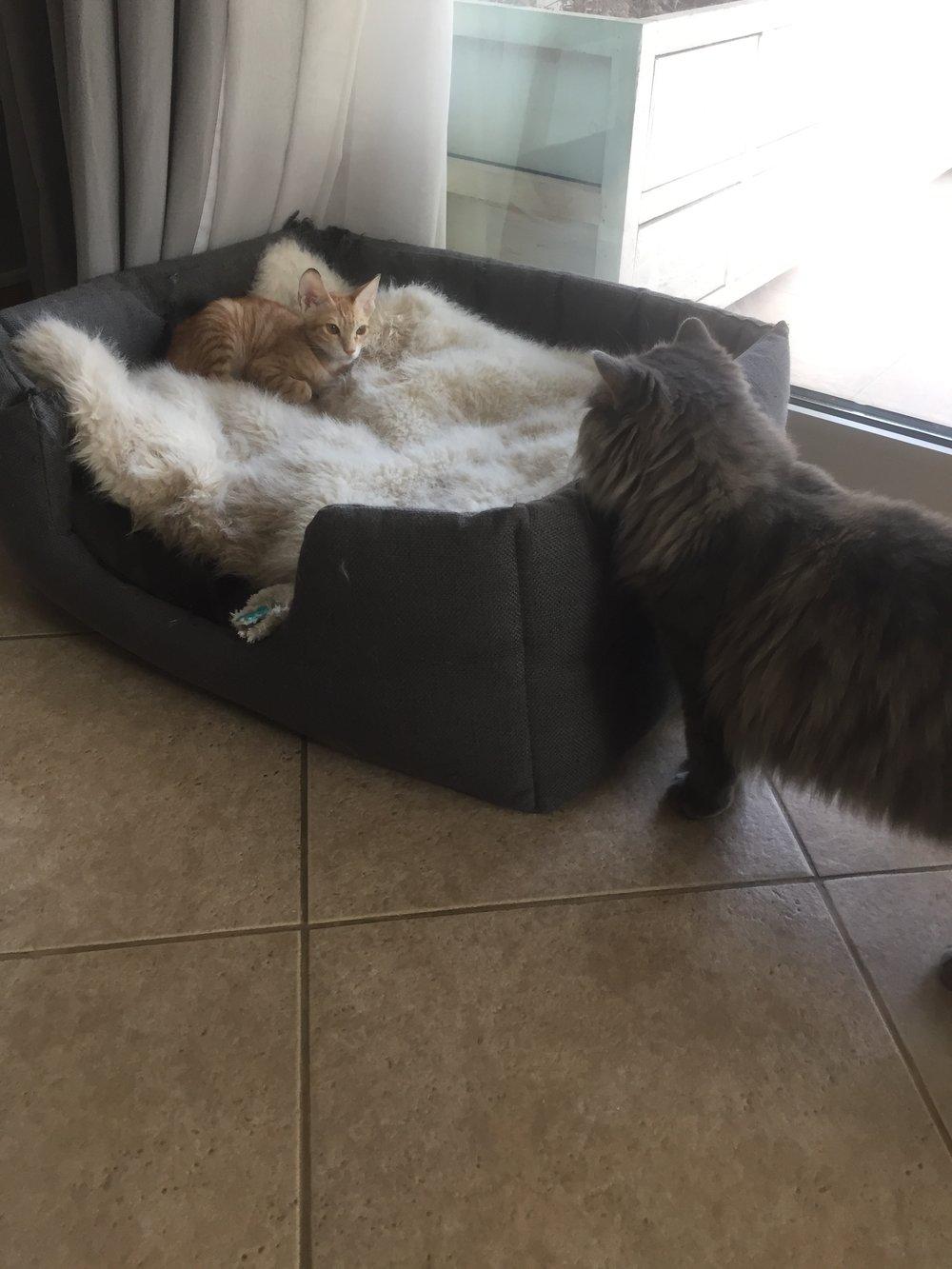 dog vs cat pet pals or really rivals u2014 howl u0026 growl
