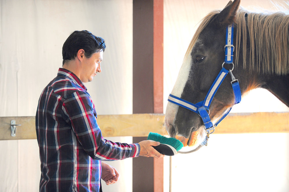 Brushing a horse at equine therapy.