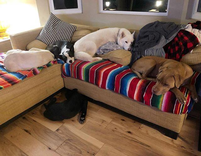 Full house 💓 #adoptdontshop