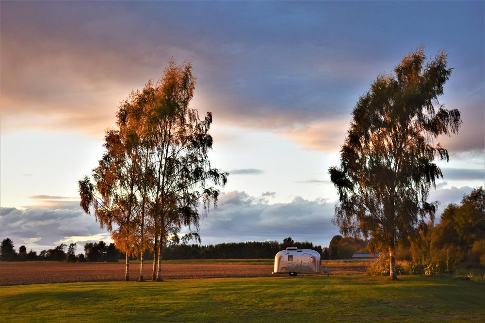 a Fall sunset on the birches and Airstream