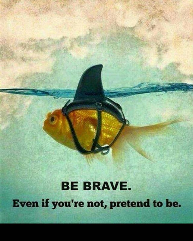 Good morning Wednesday!! You've got an amazing day ahead of you #bebrave #betheshark #crossfit #strong #yelm #fitness #gym #crossfityelm #yelmwoddogs