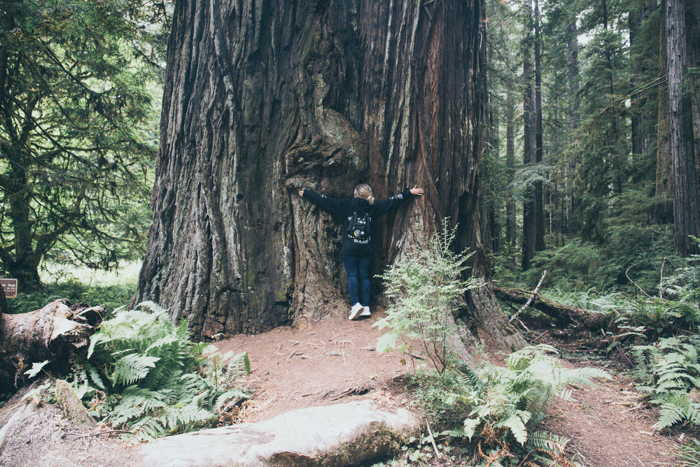 RedwooD Forests Photos -