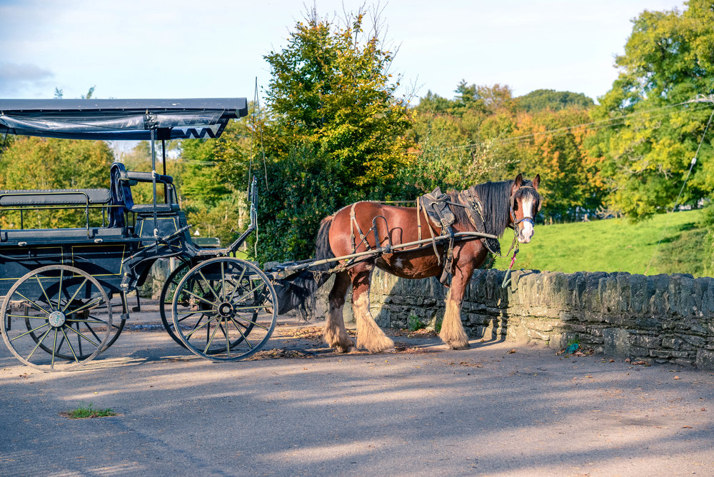 A Horse-Drawn Carriage is a sight you'll see everywhere in Killarney!
