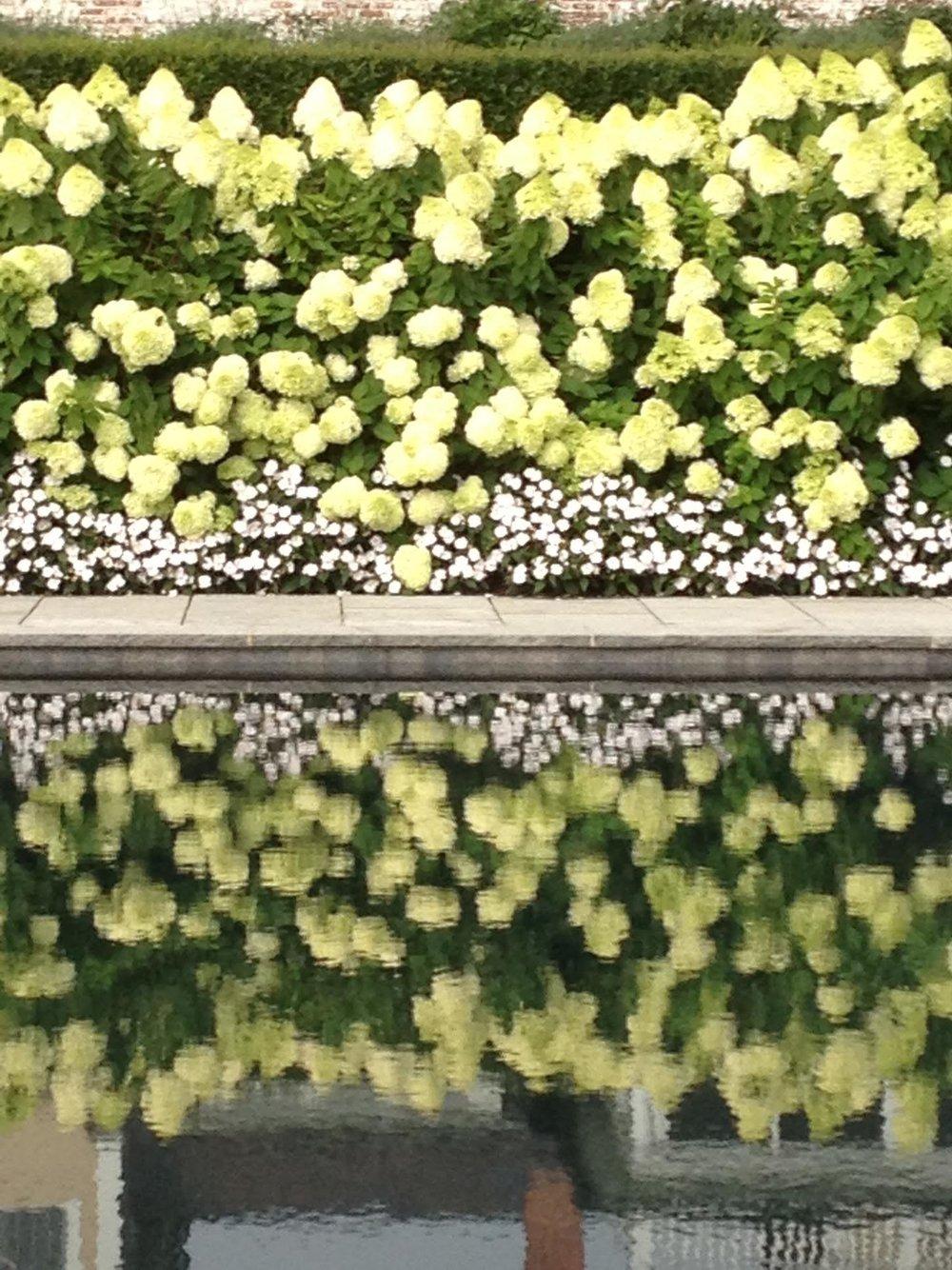 flower reflection.jpg