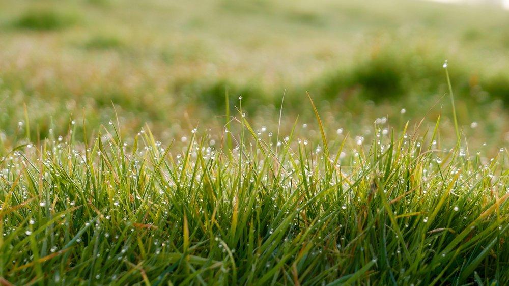 close-up-dew-field-72296.jpg