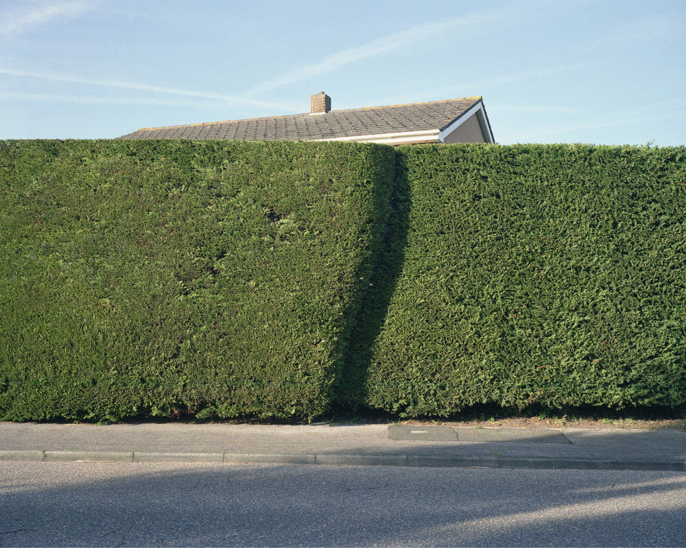 Hedge-dorset-1-1250x1000.jpg