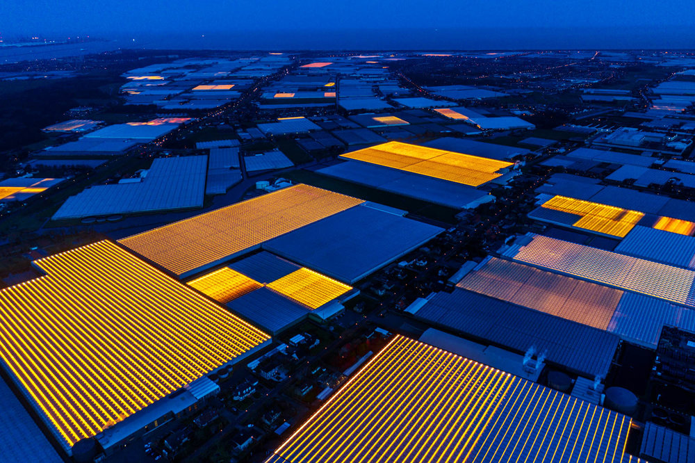"Westland – the Dutch horticultural cluster and ""Silicon Valley"" for plant growing and green innovation."
