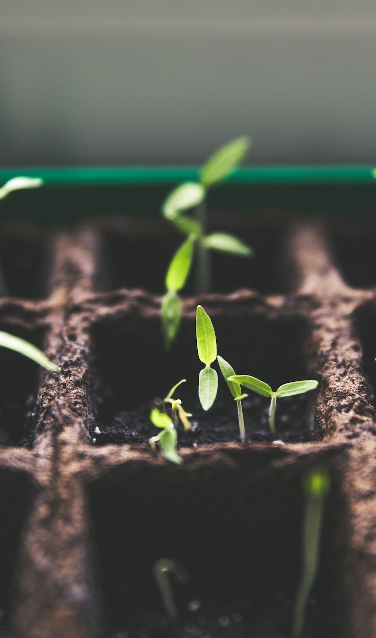 Planting &  Growing Churches