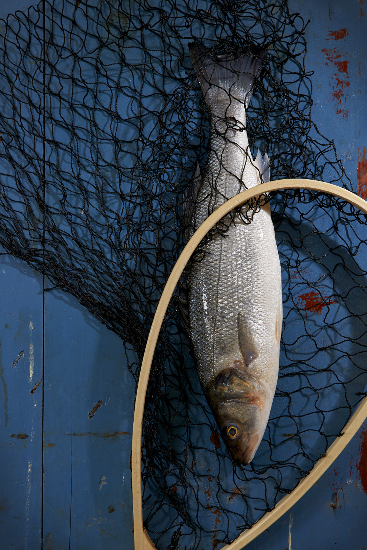 Fresh Catch: Black Bass