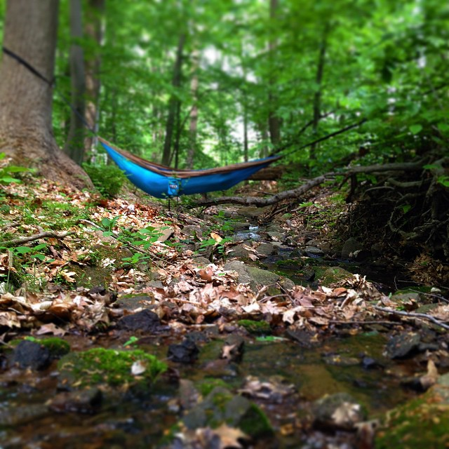 awa_creek_hammock.jpg