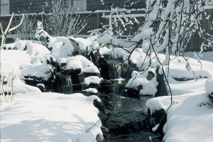 Winter Pond 3