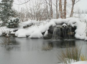 Winter pond 1