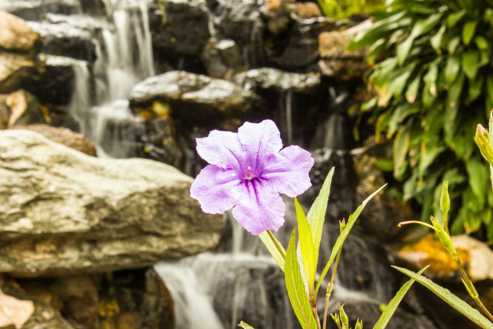Looking for Pondless Waterfall Supplies in Lancaster, PA?