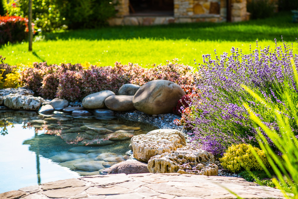 Essential Features for a Backyard Water Garden in State College, PA