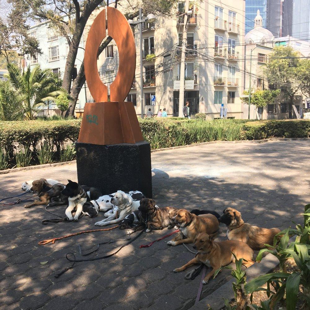 All the good Dogs / Plaza Rio de Janeiro, Mexico City / ©2016 Melody Jean Moulton