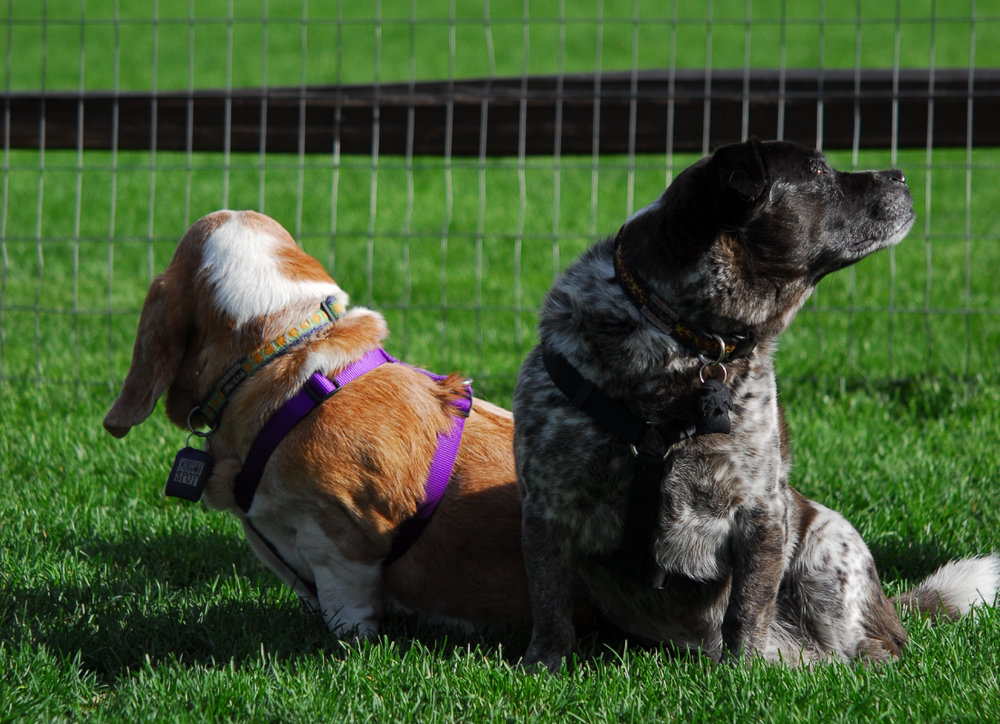 Dog Walking Services Barrie