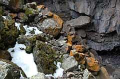 lichen06.jpg