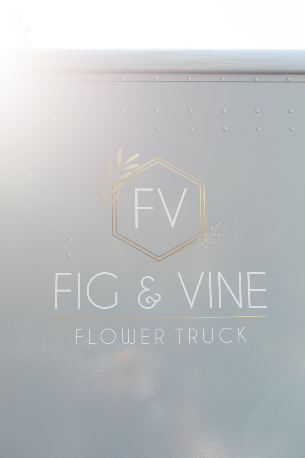 fig and vine
