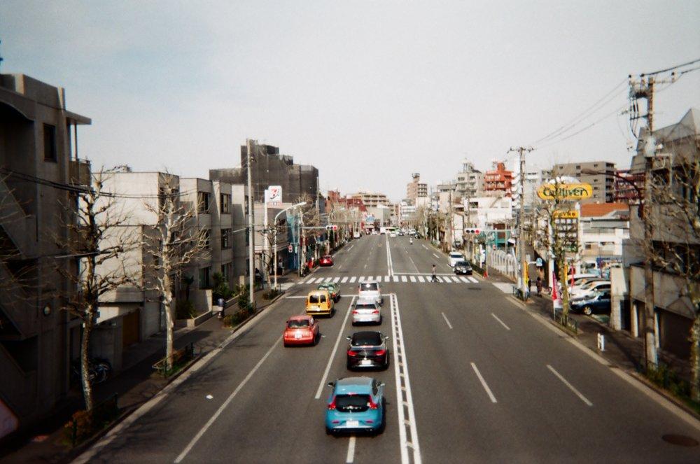 Coriander Daydreams. Japan. March 2017.  t.