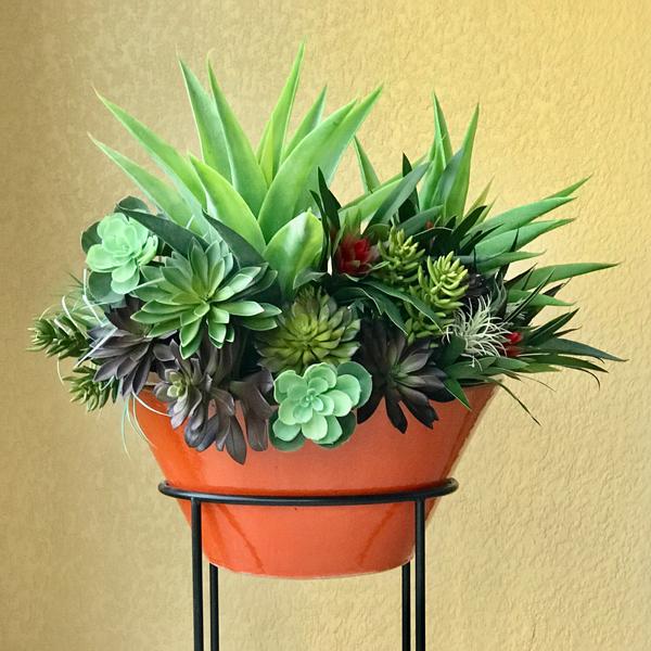 redsucculent.jpg