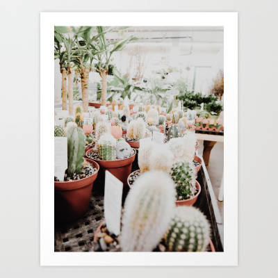 CACTI AT THE FLOWER SHOP