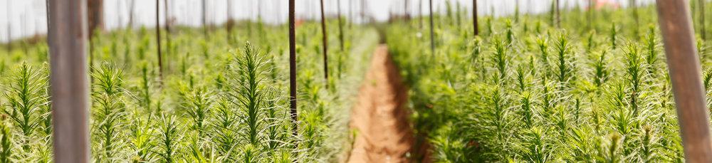 Farm-Grown-Banner.jpg