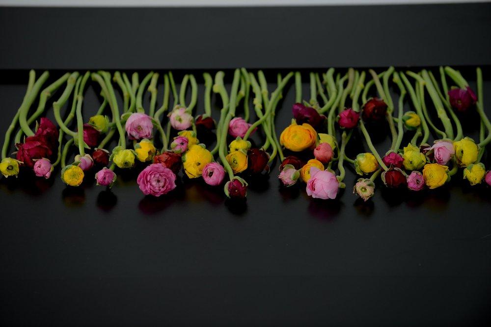 Season of spring - Ranunculus Flower Fields, Peonies, Tulips, Easter and More!
