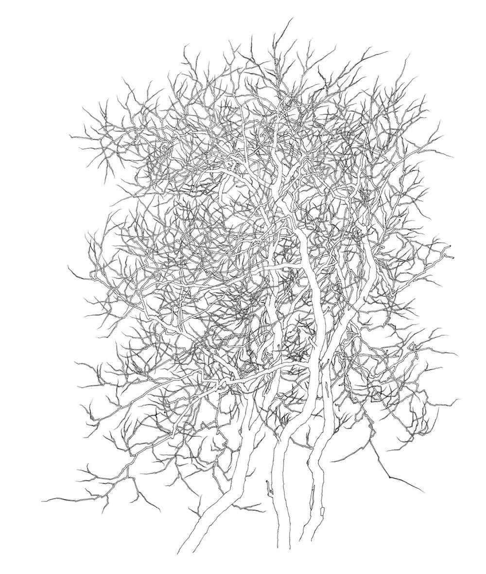 35 Tree 1996.jpg