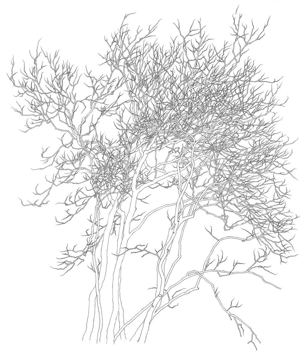 36 Tree 1995.jpg