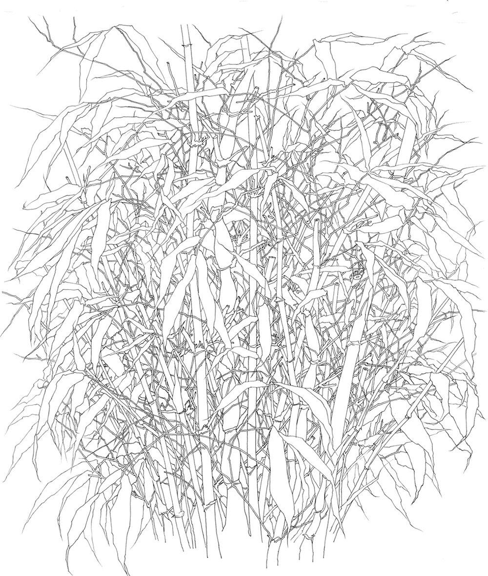 46 Bamboo 1995.jpg