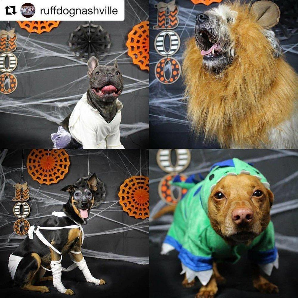 pup-contest-ruffdogs.jpg