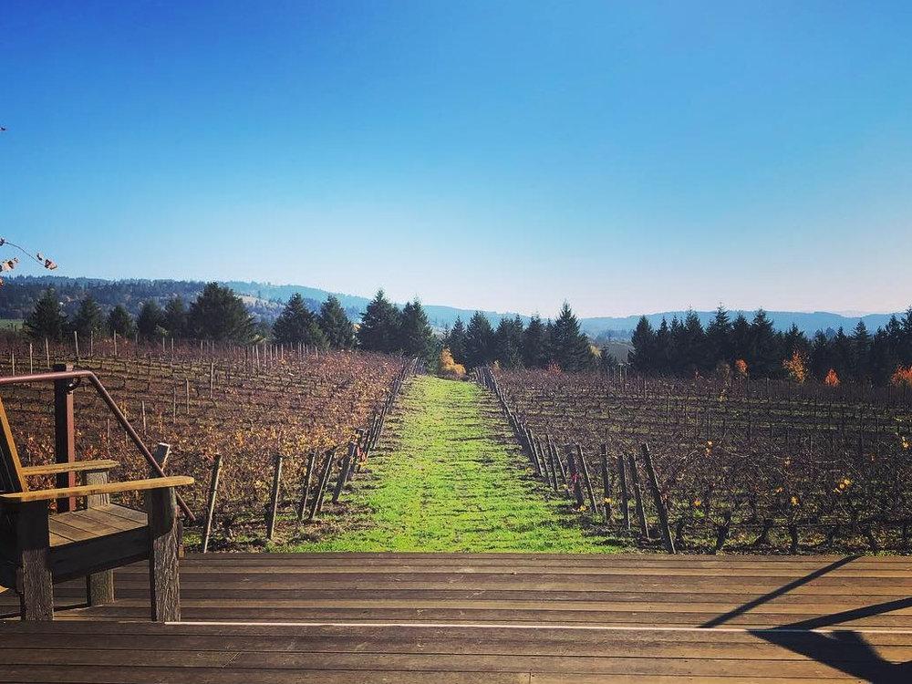 Willamette+Valley+Vineyard.jpg