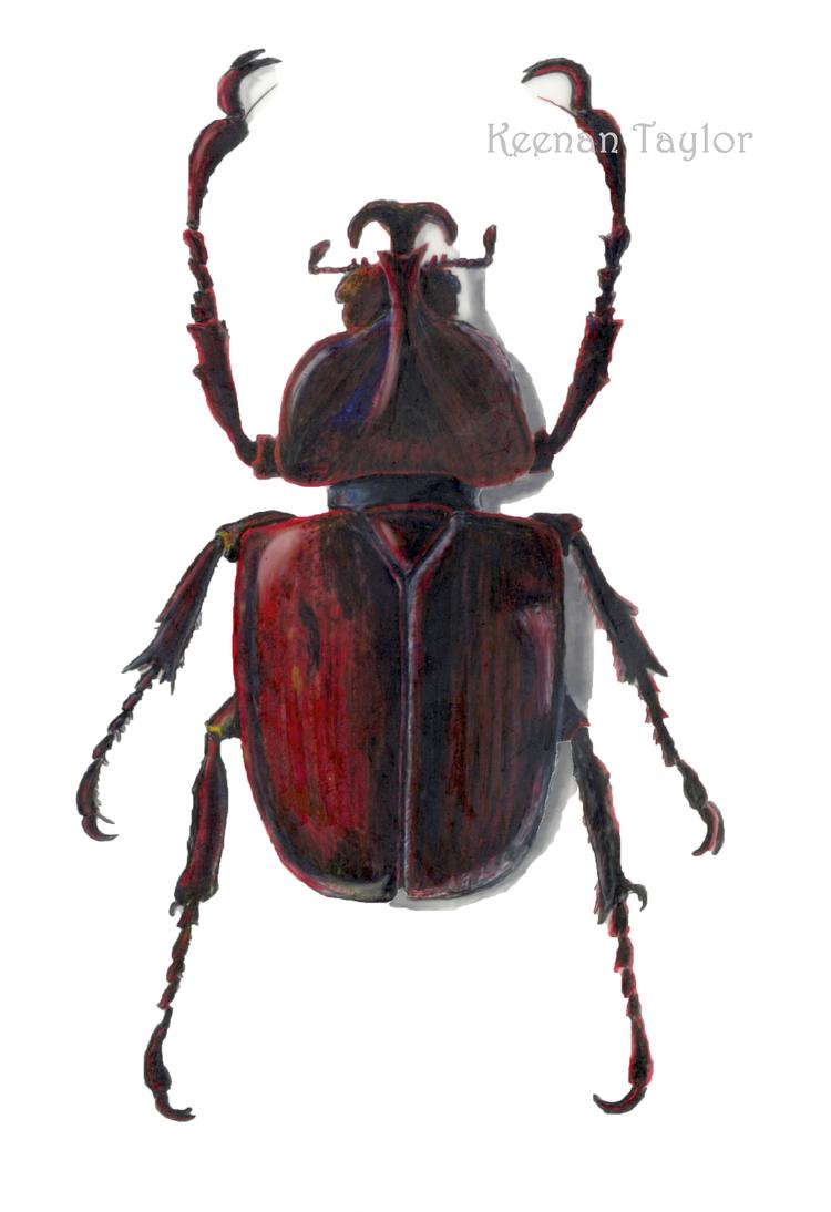 Scientific Illustration Portfolio — Illustrated Menagerie