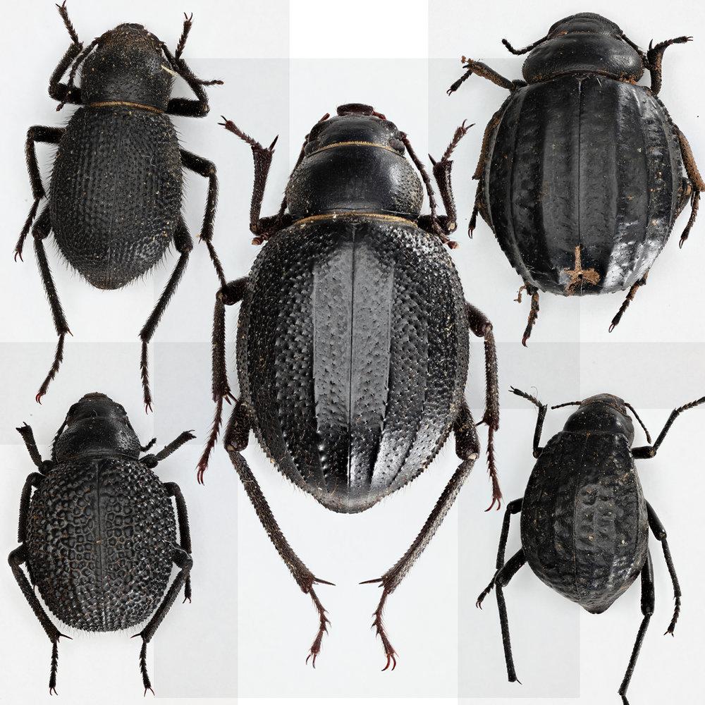 beetlemania.JPG