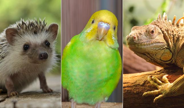 exotic-pets-thinkstock-645.jpg