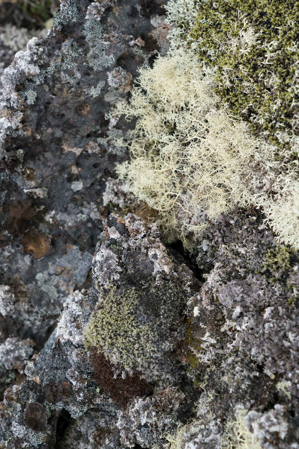 iceland_north-2.jpg