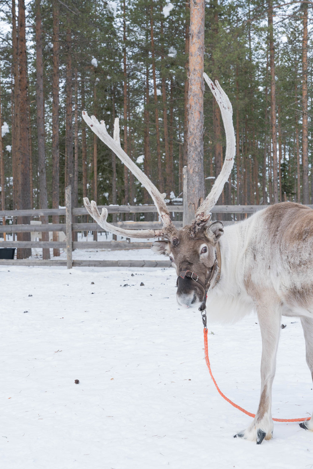 the_getaway_edit_finland_lapland-1.jpg