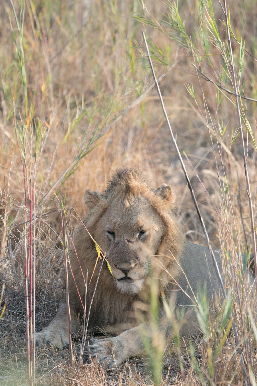 the_getaway_edit_south_africa_safari_lion_sands_game_reserve-4.jpg