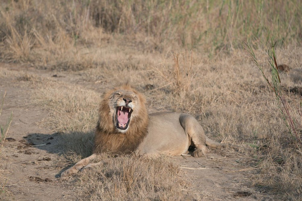 the_getaway_edit_south_africa_safari_lion_sands_game_reserve-3.jpg