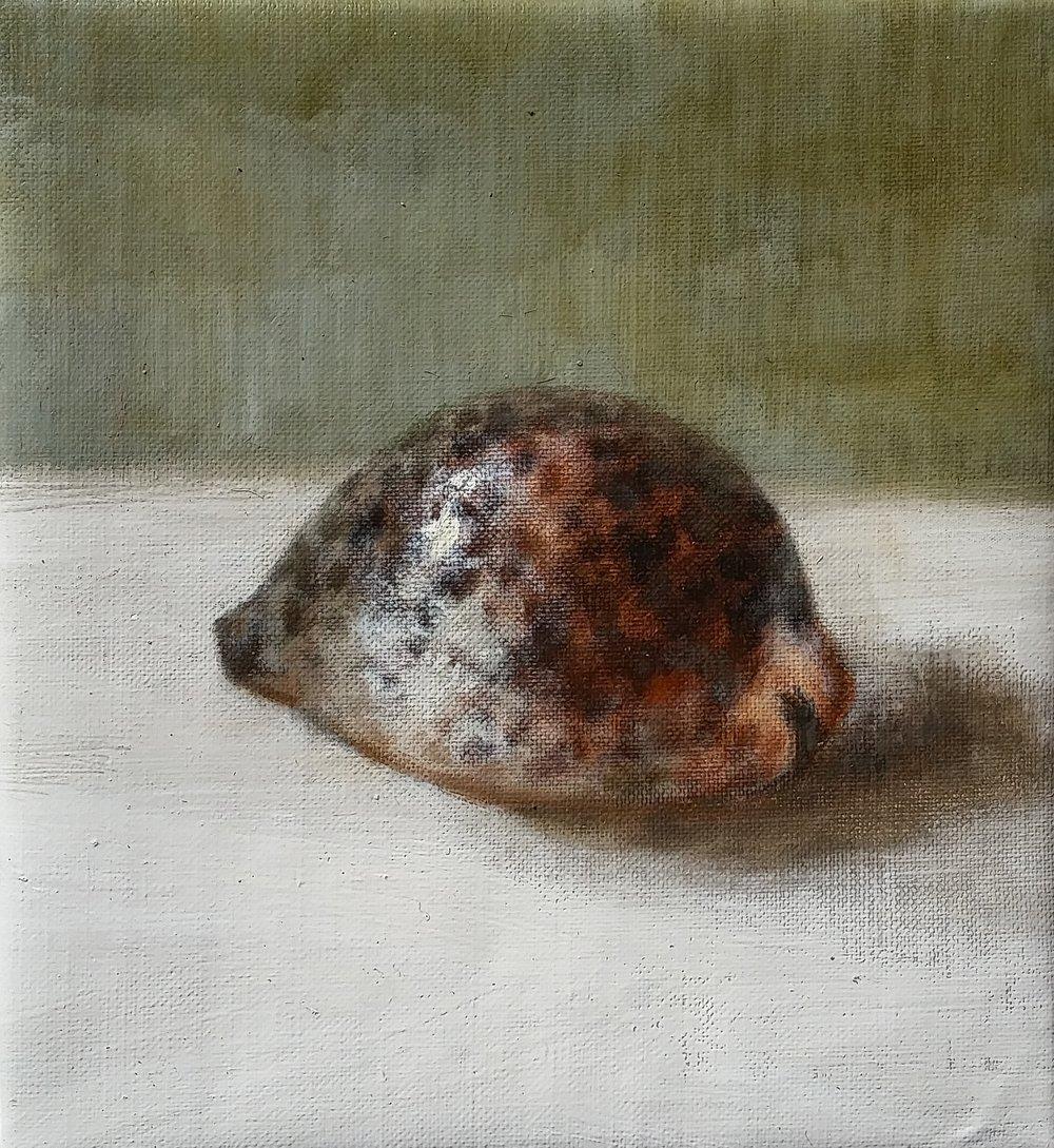shell,oil.jpg