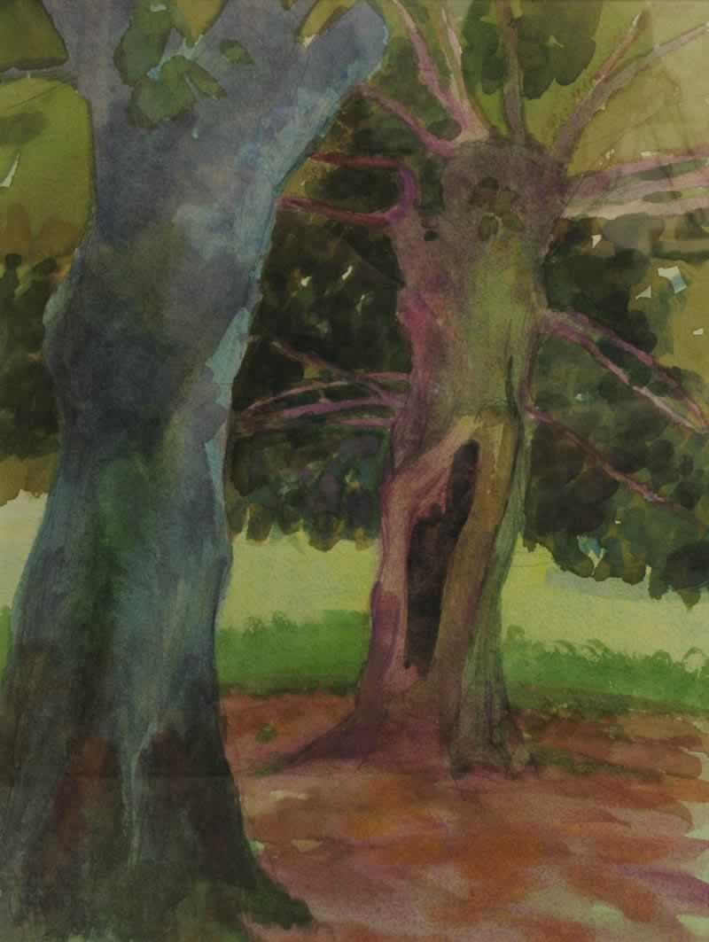 tilleuil trees, summer