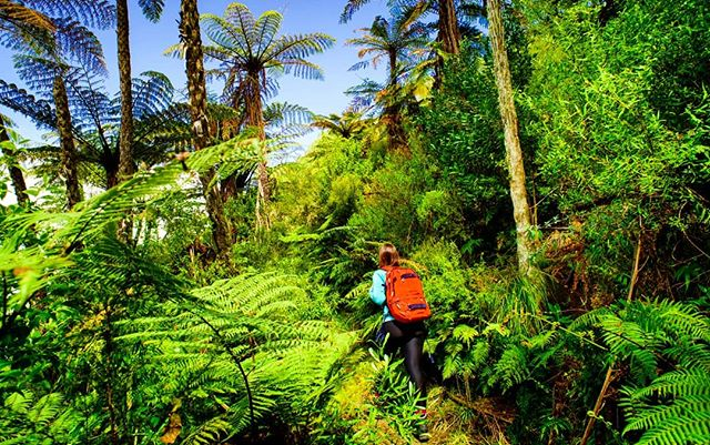 Exploring the fertile lands of Aotearoa. #newzealand #nativebush #getoutside #hikerlife #taraweratrail #fern