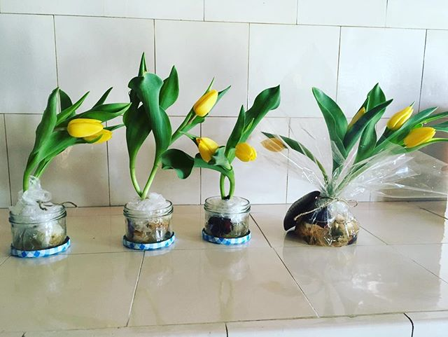 #bestdadoftheworld ❤️#selfmade #tulips for his three #daughters and #wife #womensday2019