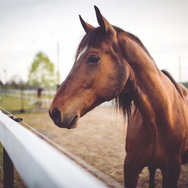Horses can help to provide a place of emotional safety and trust.⠀ .⠀ They model healthy functioning.⠀ .⠀ They offer unique feedback.⠀ .⠀ They evoke emotion in us.⠀ ...⠀ ⠀ .⠀ .⠀ .⠀ .⠀ .⠀ #helloyescoaching #lifecoach #coachingwithhorse #horsesasteachers #horsecoach #equineassitedlearning