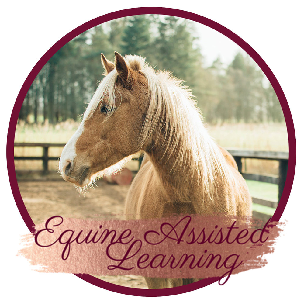 Aimee-Wilson-Equine-Assisted-Learning.jpg